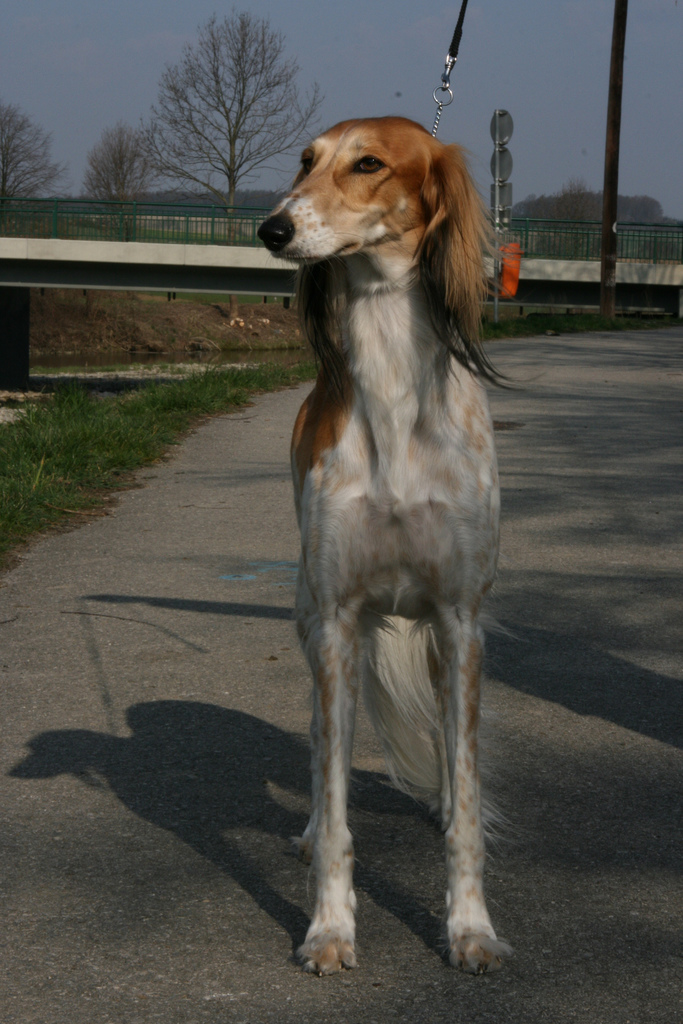 The Saluki Archives